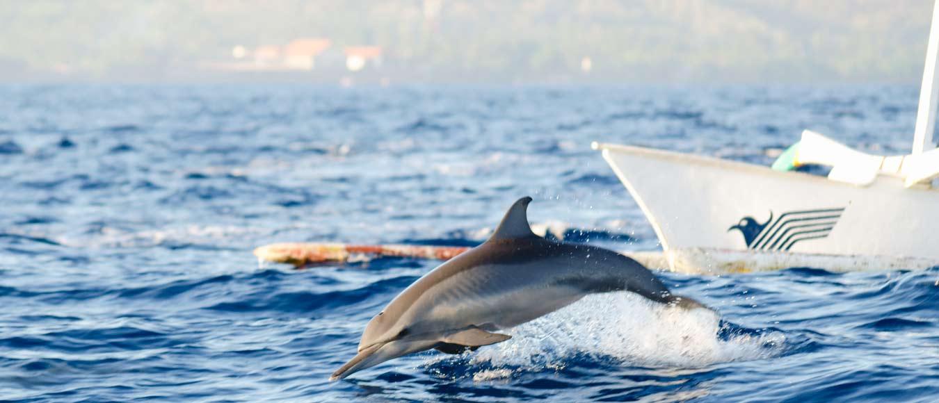 delfin_home